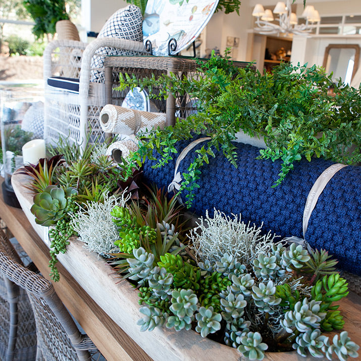 Succulents in timber bowl.