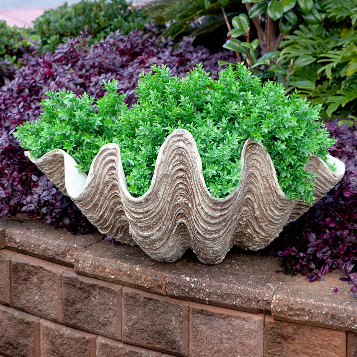 Clam used as planter.