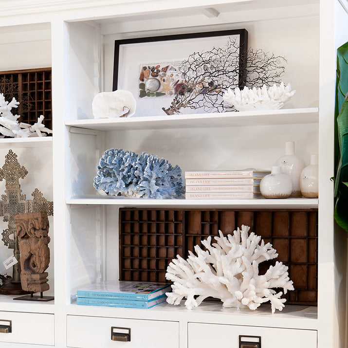 A range of corals styled on book shelves.
