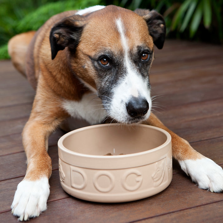 Odie the Boxer mix eating from his new dog bowl.