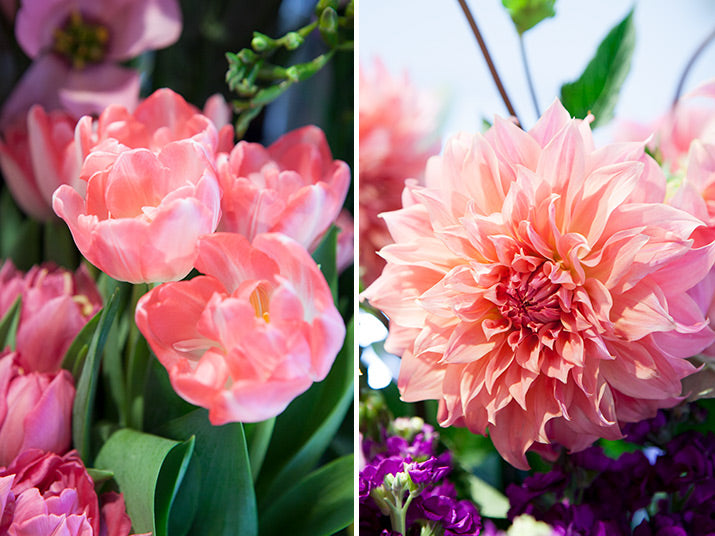Close ups of pink flowers.
