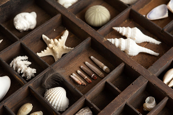 A printer's tray filled with shells.