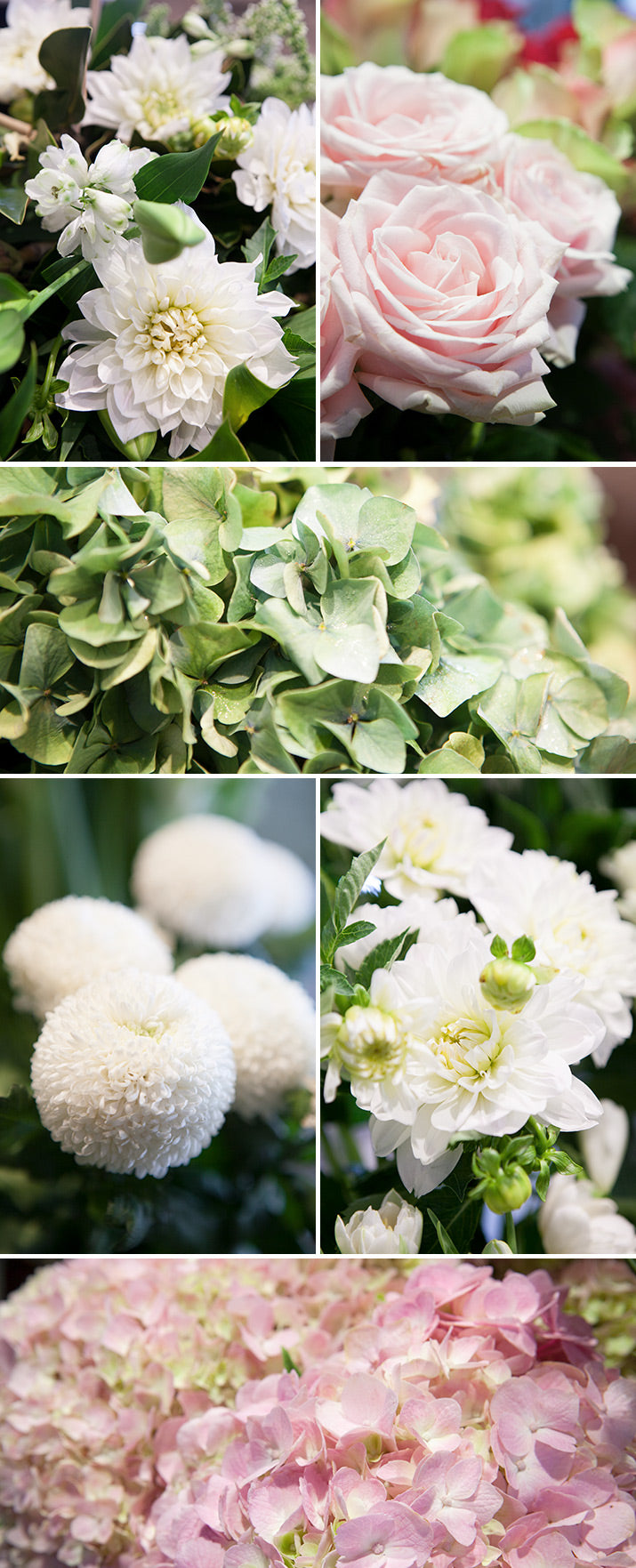 A collection of close ups of white flowers.
