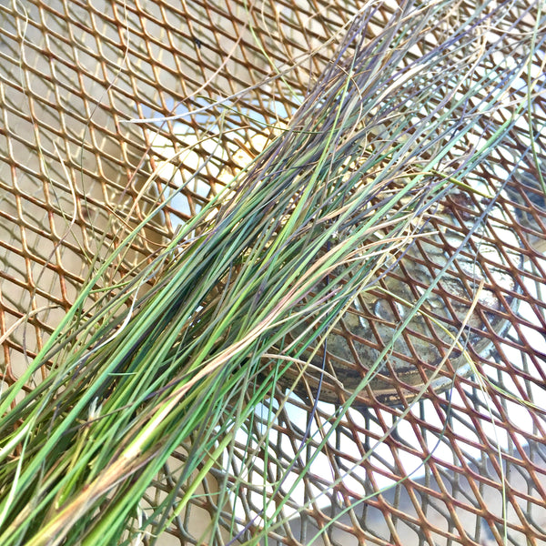 Native Lemon Grass | Warndu Australian Bush Tucker © Warndu Pty Ltd. Photographs by Luisa Brimble.