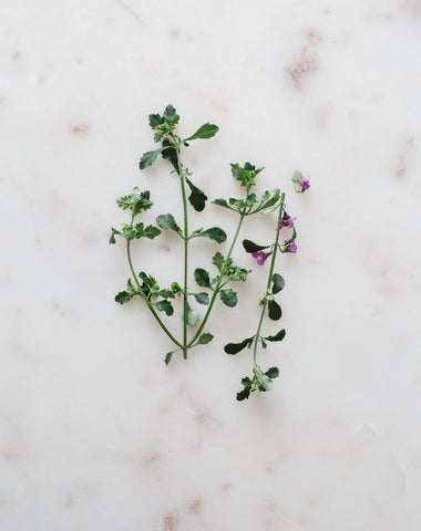 Native Thyme | Warndu Australian Bush Tucker © Warndu Pty Ltd. Photographs by Luisa Brimble.