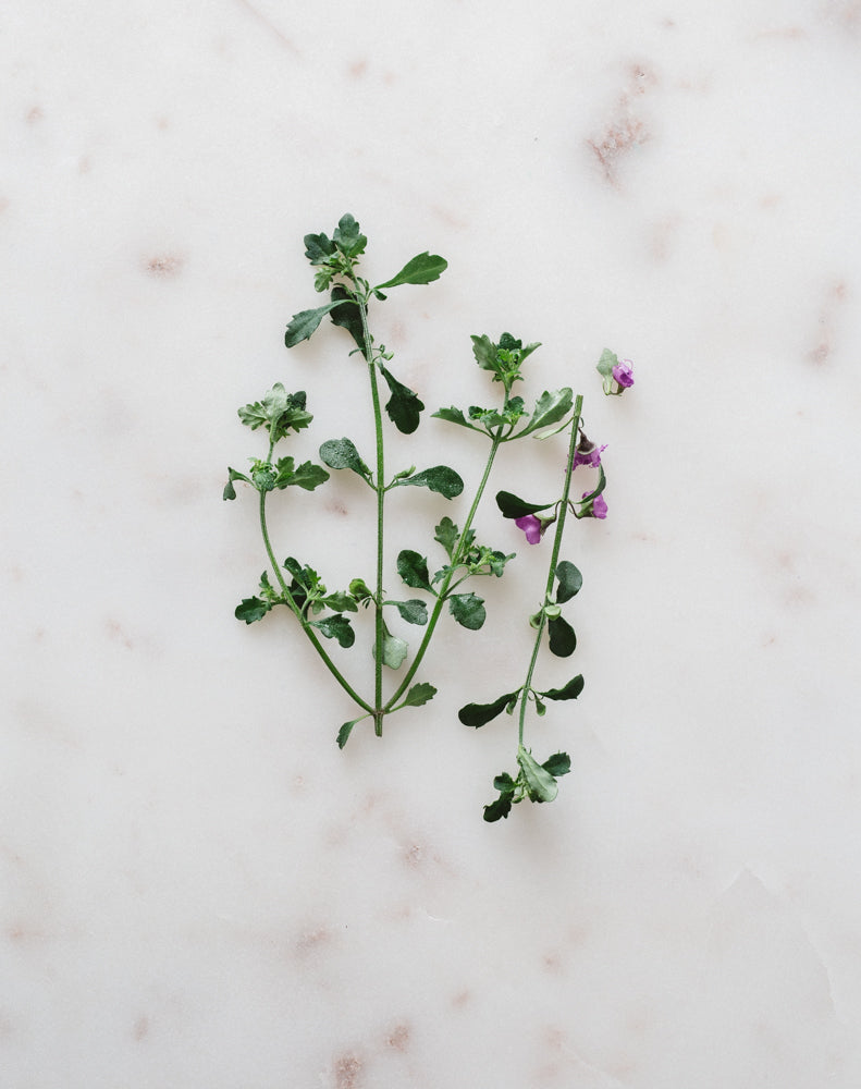 Native Thyme ~ Dried and Ground 50g