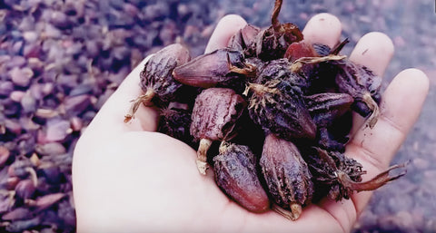 Black Cardamom used in EltheCook Readymade Tadka (Tempered SPice blends). Shipping worldwide