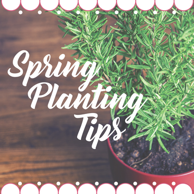 Helpful Planting Tips for Springtime