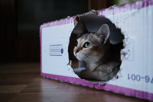Natural Disaster Preparedness for Cats