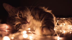 5 New Year's Resolutions for Cat Owners