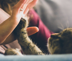 4 Signs Your Cat Loves You