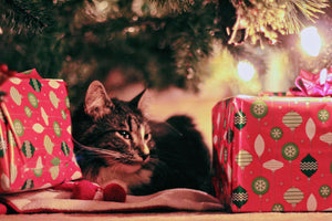 5 Ways to Keep Your Cat Safe This Holiday