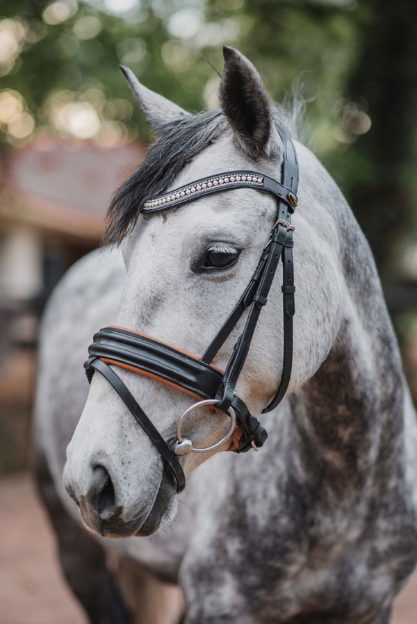 black leather bridle on horse