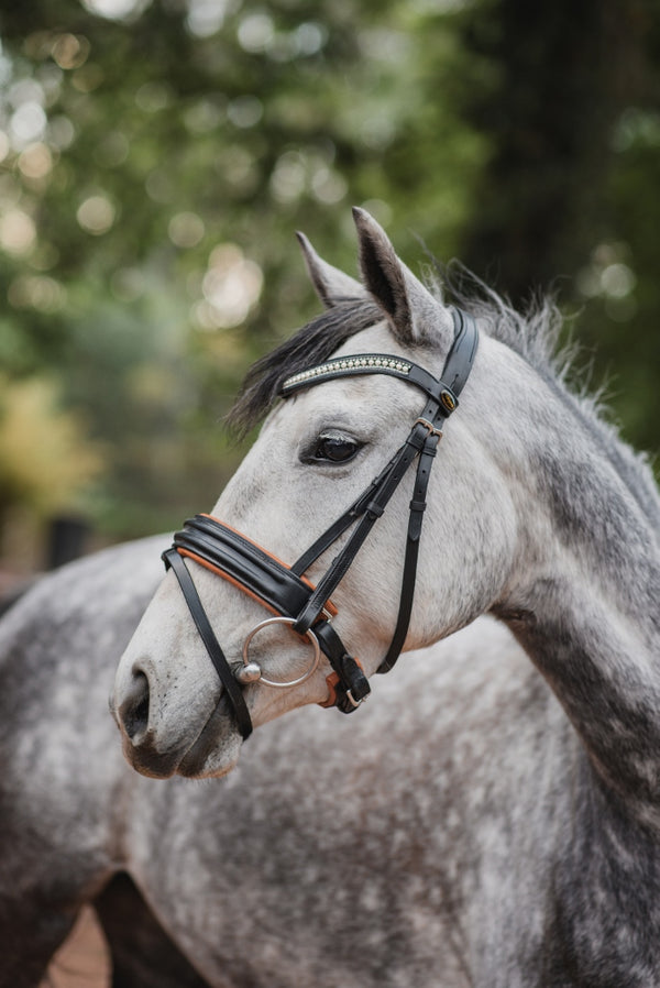 bridle on horse