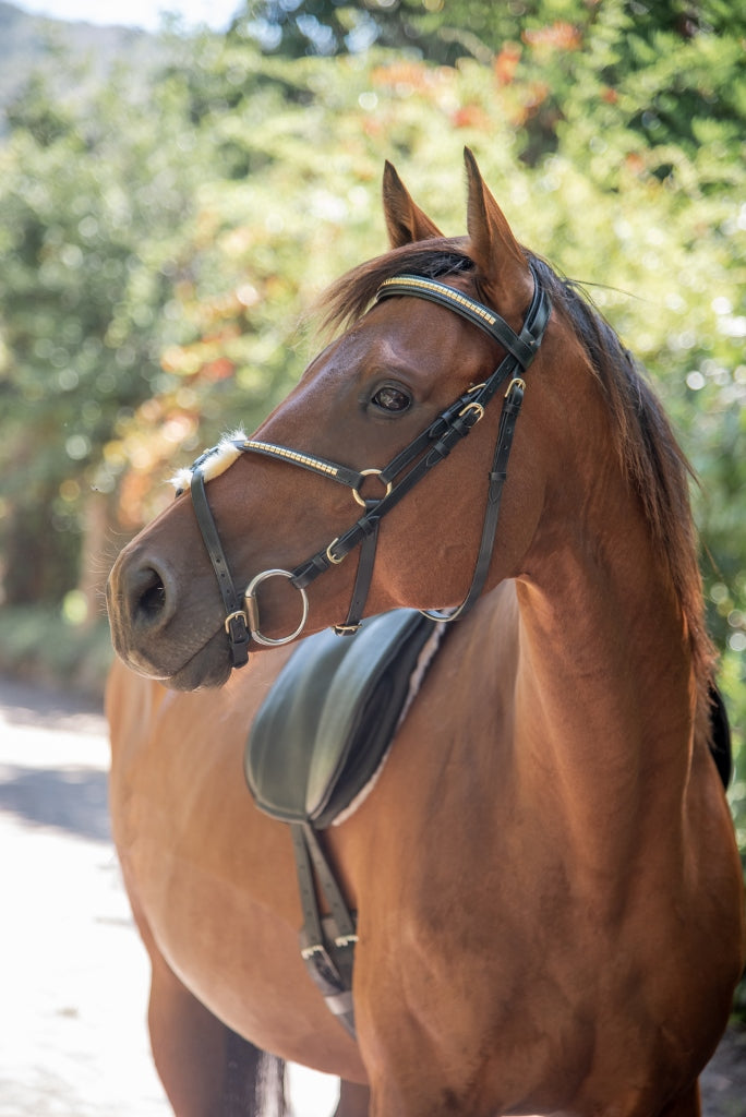 ST-BR/030 Black Leather Grackle Bridle with Gold Stones