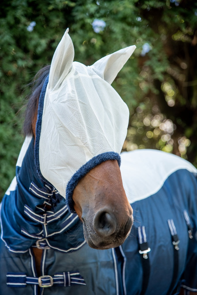 Blue Fly Mask and Fly Sheet