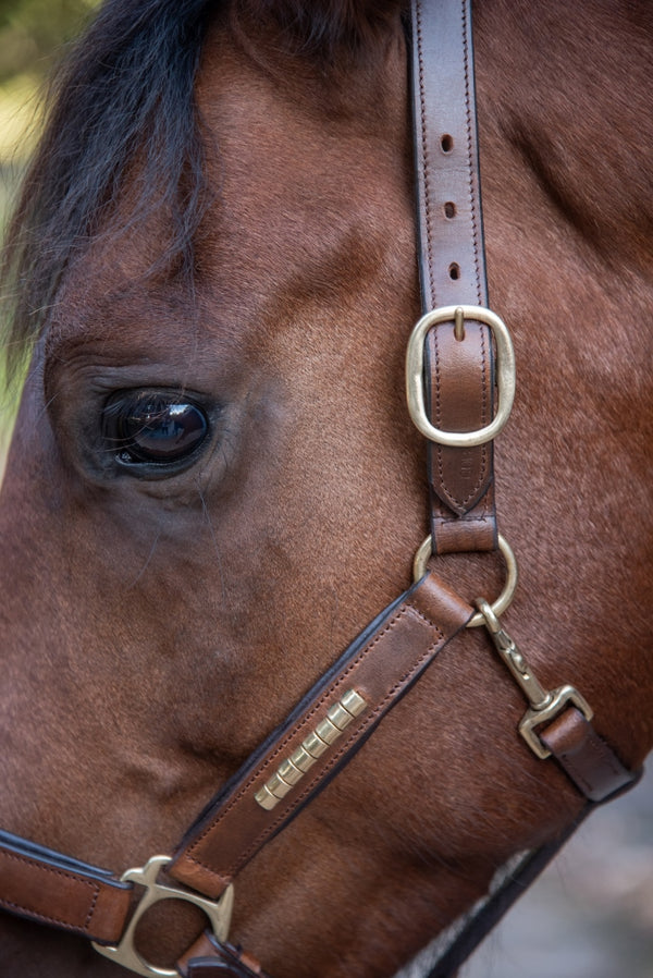 Gold Leather Halter on Horse
