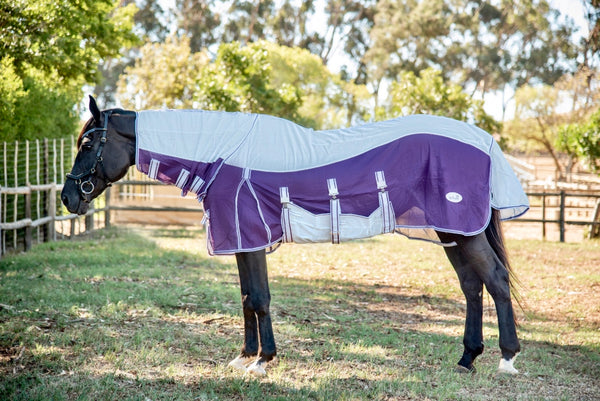 Fly Sheet on Horse