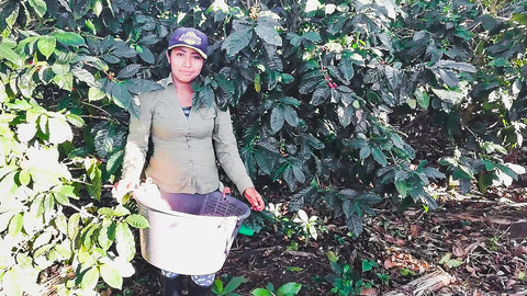 Invito coffee worker holding a basket of green beans