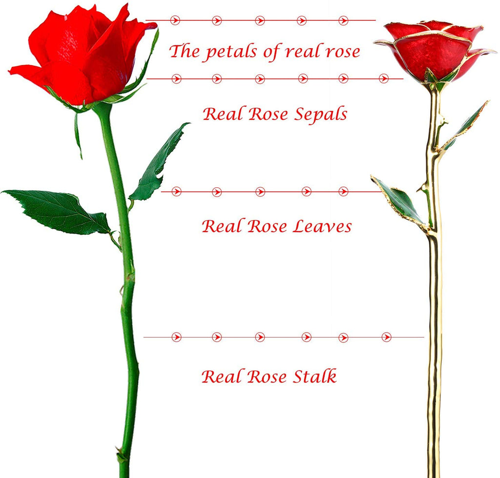 24k Gold Real Rose with Stand - beyondtrendi
