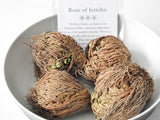 Rose of Jericho- The Resurrection Flower - Mindful Intentions