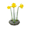 Trio Bud Vase with Daffodils