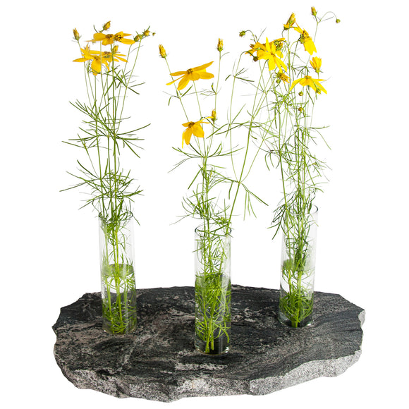 Triple Bud Vase in Black with Coreopsis