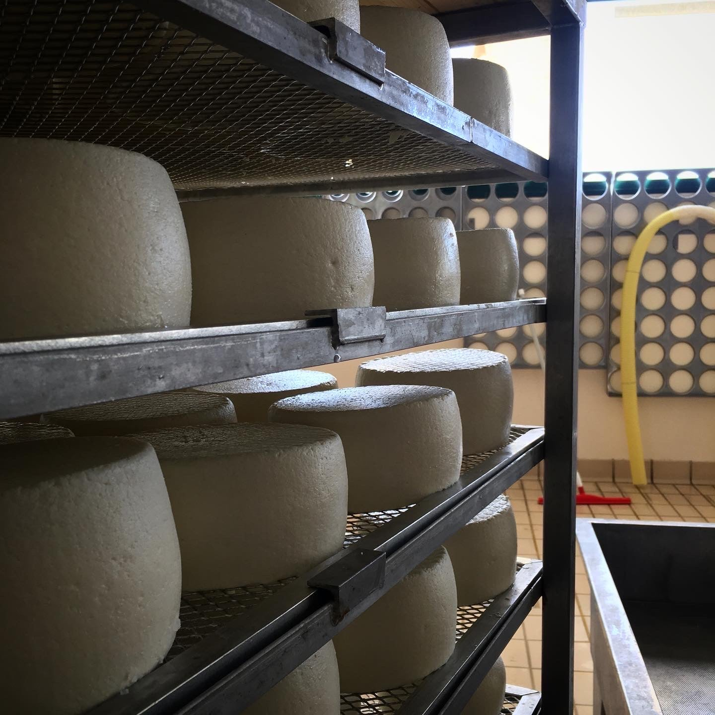 Pecorino. Minimum Weight 240g