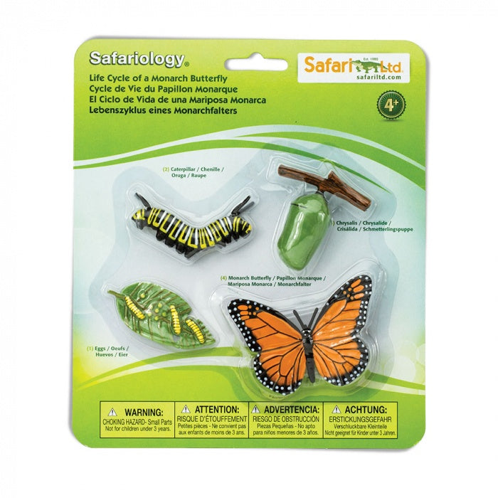 Safari - Life Cycle of a Monarch Butterfly
