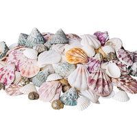 Zart - Discovery Sea Shells 700g