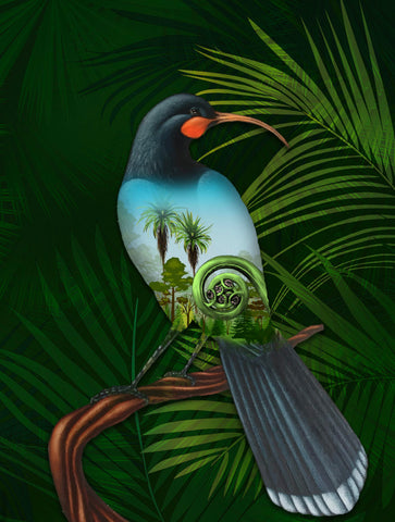 Huia Bird New Zealand Jigsaw Puzzle K5 - 1st New Zealand