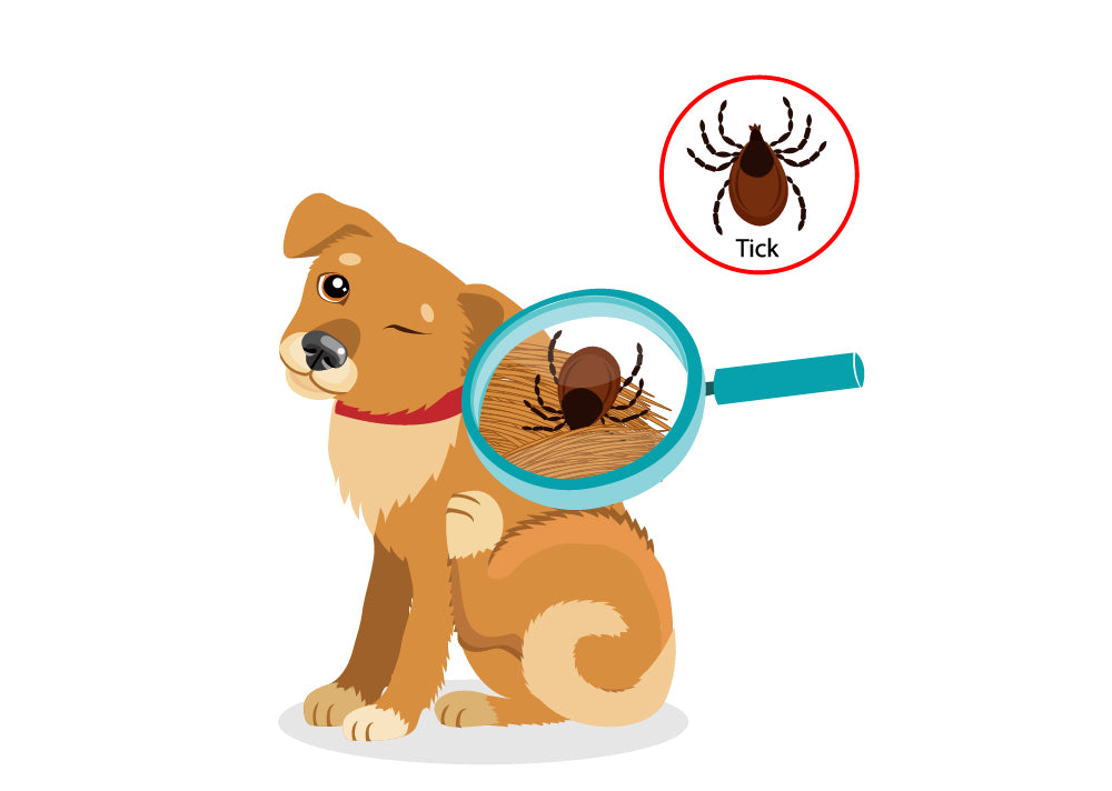 Quick Guide to Avoiding Ticks for Your Pet This Season