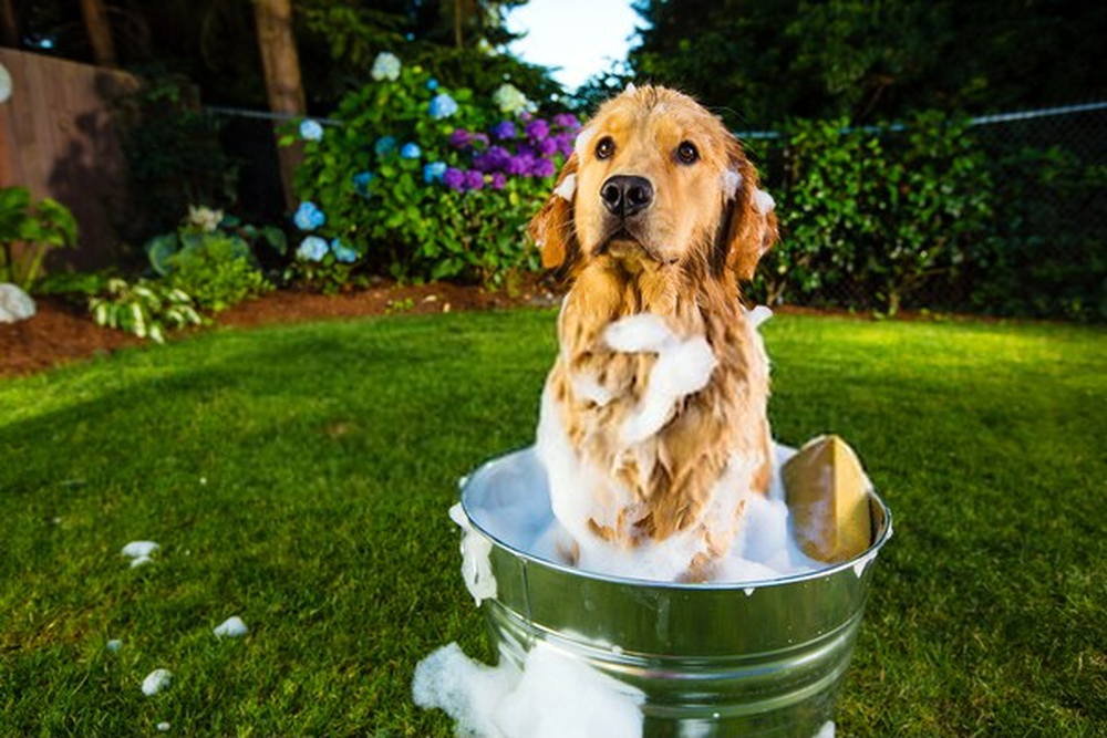 How often to bathe your pet ?