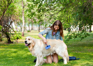 How to Care for Foreign Dog Breeds in India?