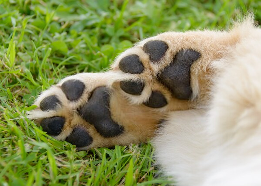 The perfect guide to care for those paws