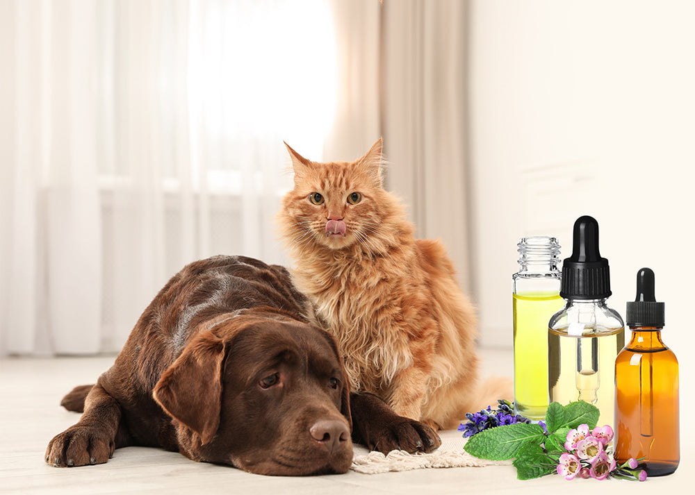 3 Natural Wellness Products for Pet Doggos and Cattos