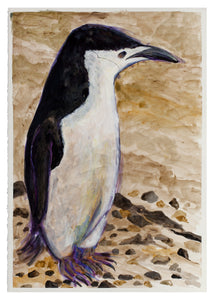 Untitled (Penguin)