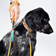 Carrot Cake Dog leash