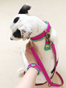 Lollypop Pink Dog Collar