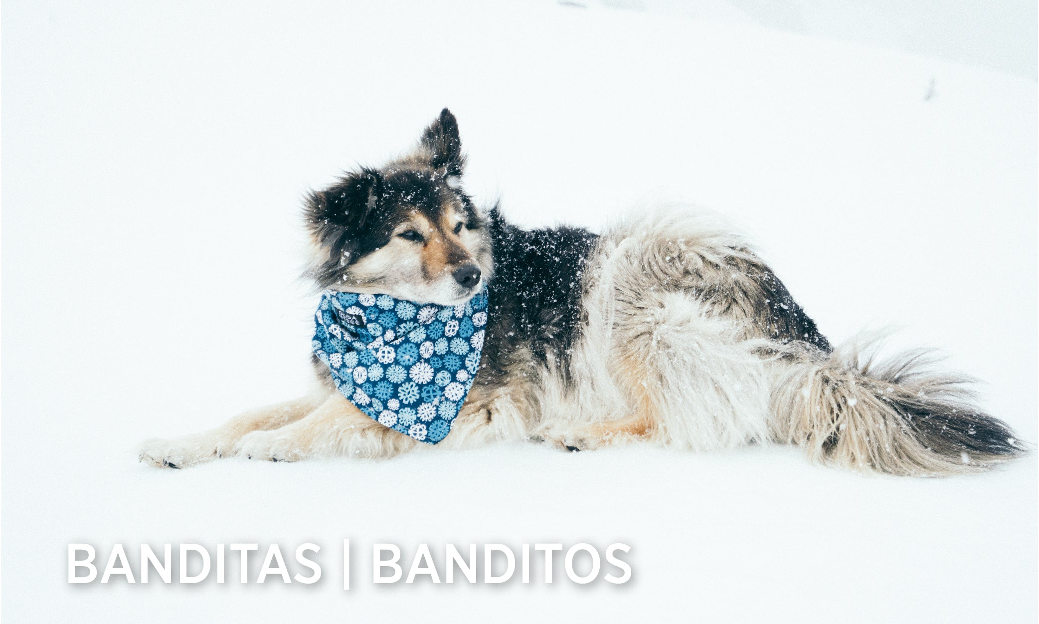 Shop All Skida Banditas & Banditos!