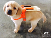 Guide Dog Training Begins Early