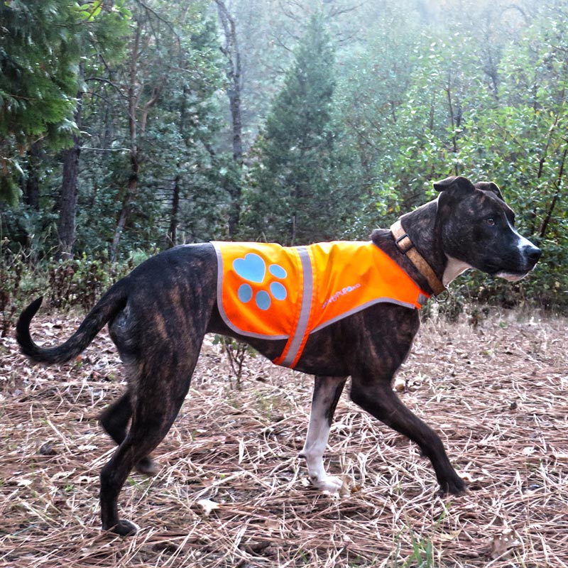 SafetyPUP XD Blaze Orange Reflective Dog Vest comfortable fit for dogs all sizes