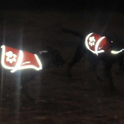 SafetyPUP XD Blaze Orange Reflective Dog Vest night vision to see your dog