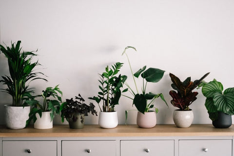 potted plants lined up in a row