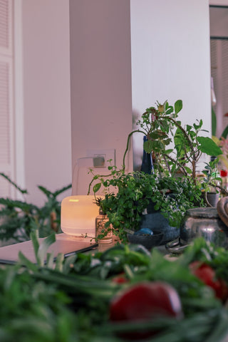 many indoor plants and an oil diffuser