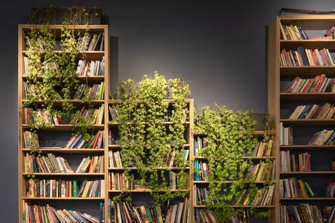 book shelves with hanging plants