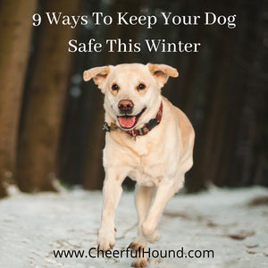 Protect Your Dog This Winter - Cold Weather Safety Tips!