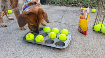 Dog Enrichment Made Easy: The Muffin Tin Game