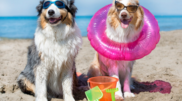 Summertime Safety Tips For Your Dog