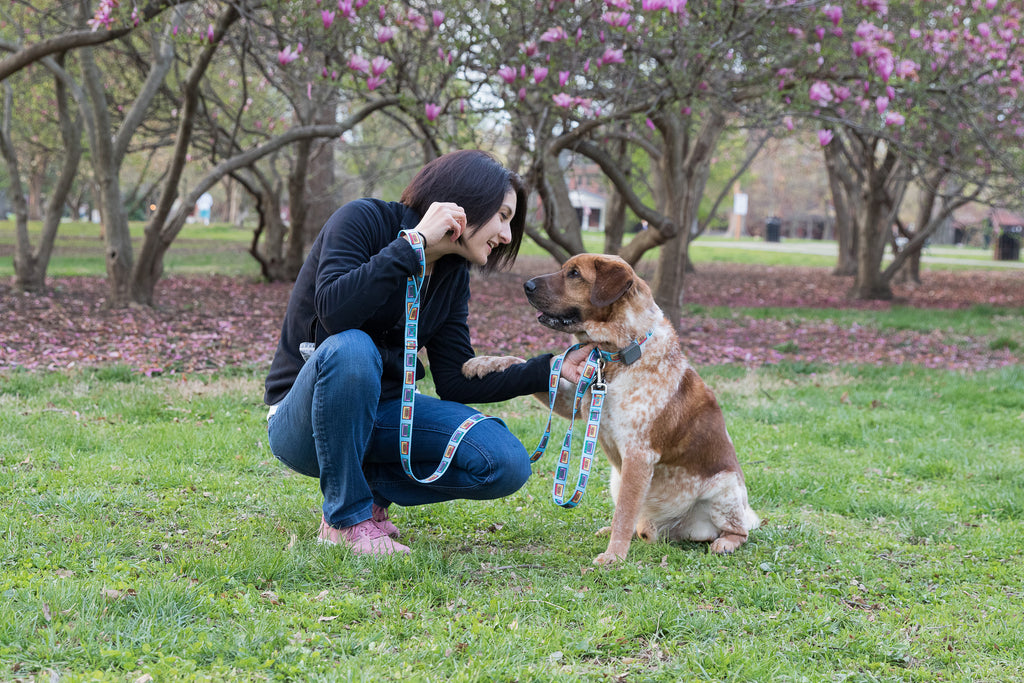 Bond with Your Dog-Cheerful Hound Tips